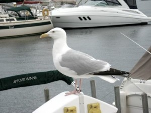 seagull-perched-on-boat